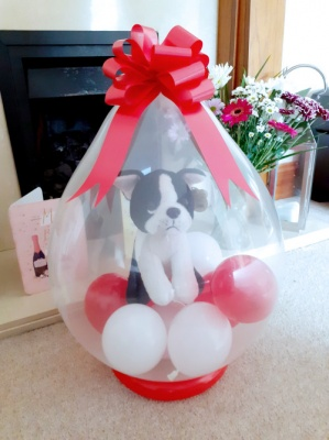 Dog inside a balloon - Balloon in a Box